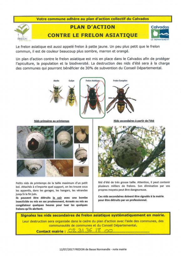 Notre commune adhère au plan d'action collectif du Calvados contre le frelon asiatique