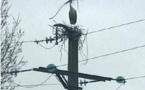ENEDIS Flash info : des cigognes sur notre secteur...